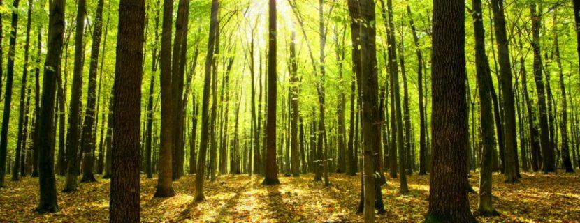 Het verschil tussen hardhout en zachthout
